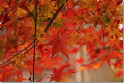2010.11.28 秋月 008